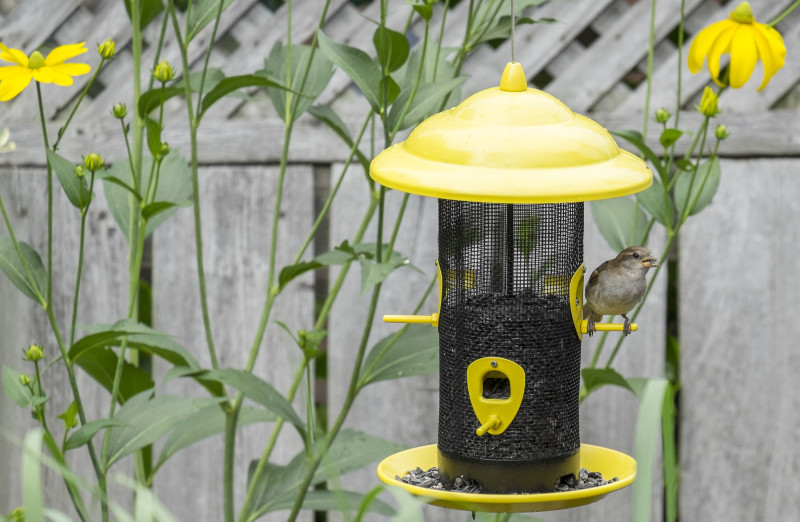 Feed Your Backyard Birds in the Fall and Winter